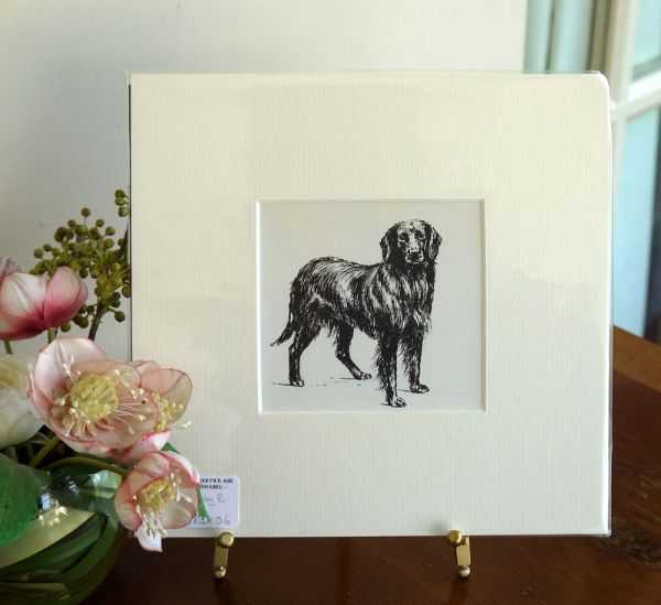 Flat Coated Retriever - standing - Ret O6 - 1960's print by Bridget Olerenshaw